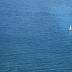 2In A Big Sea - ID: 15932058 © Jacquie Palazzolo