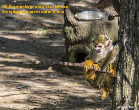 All The Monkeys