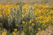 Yucca Bouquet
