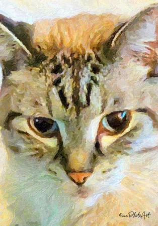 Feline Facial