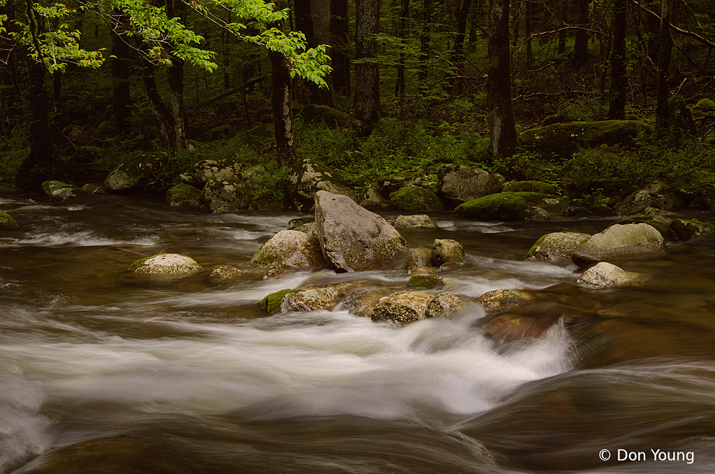 Smoky Mountain Stream - ID: 15933781 © Don Young