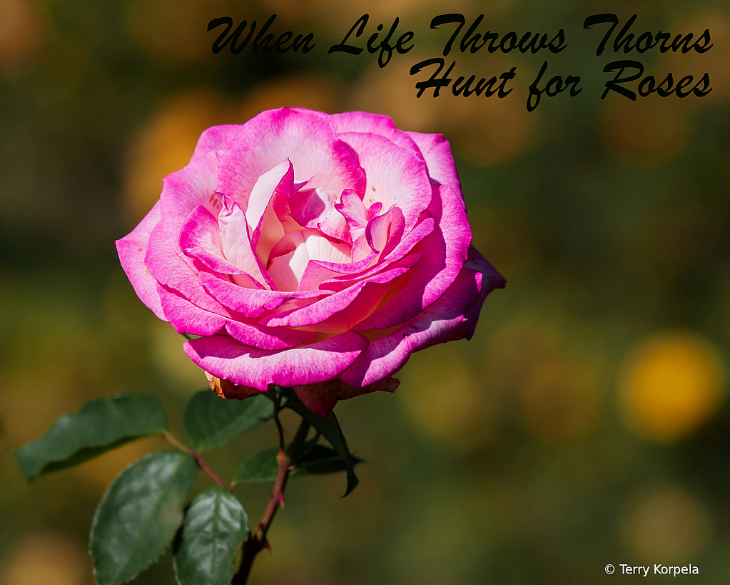 When Life Throws Thorns!