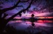 Magical Evening C...