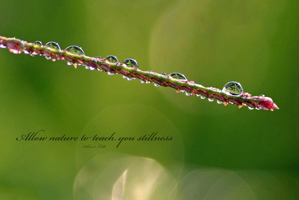 Allow Nature To Teach You Stillness