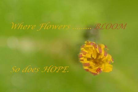 Hope & Bloom