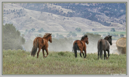 Feeding Time at the Wild Horse Sanctuary