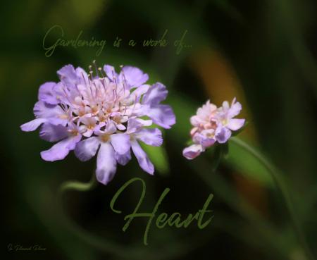 Gardening is a Work of Heart