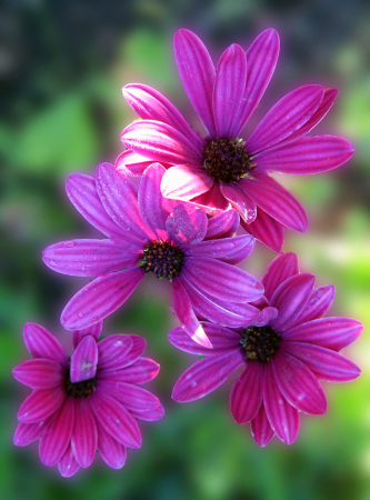 Purple  Cuties