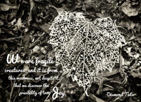 Fragility's Blessing