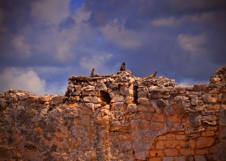 Iguanas the Ruins of Tulum
