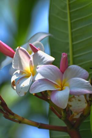 DELICATE FLOWERS III