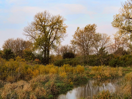Roadside Pond