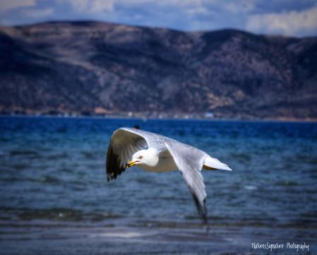 ~ Seagull Landing ~