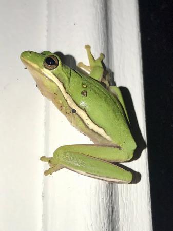 Three leg frog