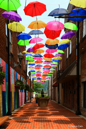 Alley Colors