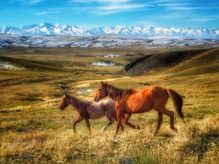 ~  ~ WILD HORSES ~ ~