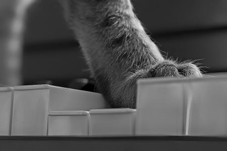 Paw on Piano Keys