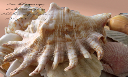 A Sea Shell Is Never Empty