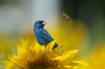 Birds and the Bee...