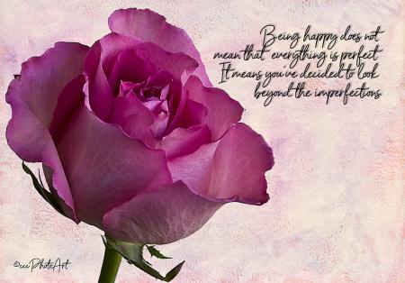 Perky in Pink Rose
