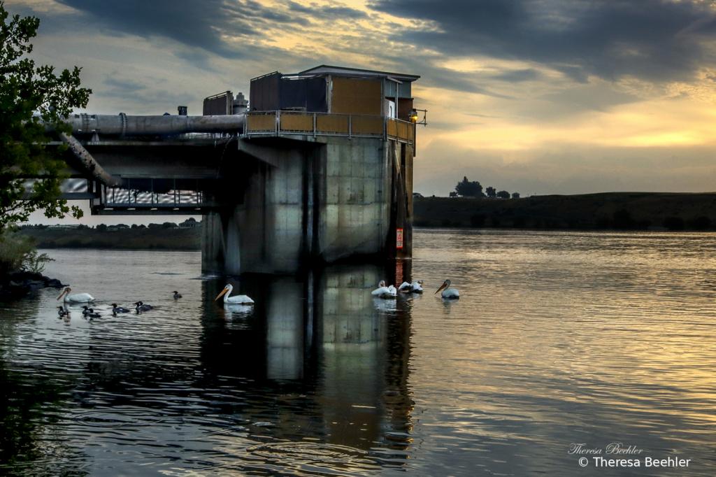 Pelicans at Dawn - ID: 15946474 © Theresa Beehler