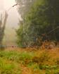Autumn weave