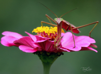 Photography Contest Grand Prize Winner - August 2021: Praying Mantis
