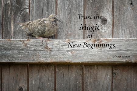Trust the Magic...