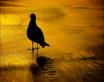 ~ ~ BIRD'S FOOT...