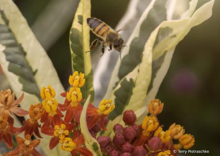 A Little Bee