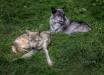 Wolf Sanctuary, H...