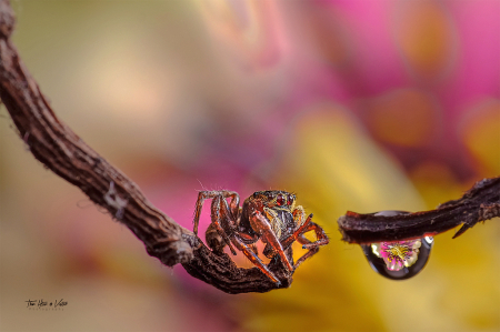 Spider and drop