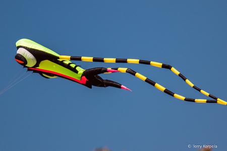 Kite Flying at the Marina