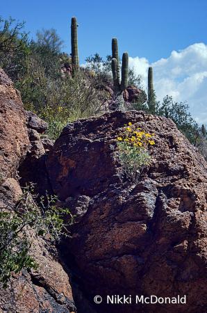 Of Saguaro and Rocks