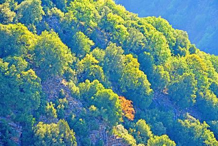Morning light on tree peaks.