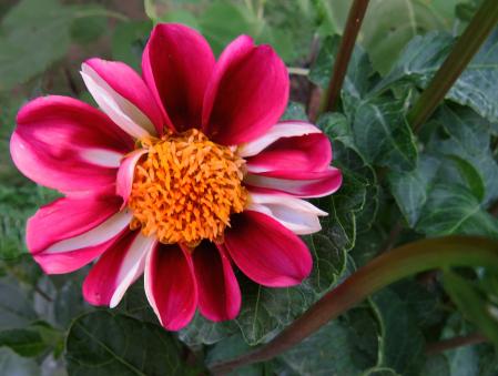 Cool Little Flower