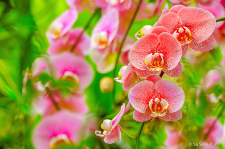 Enchanted Orchid Garden