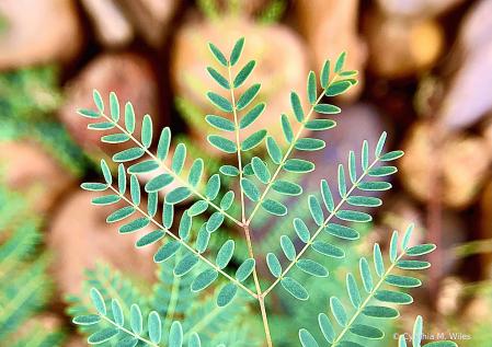 Green Velvet Leaves