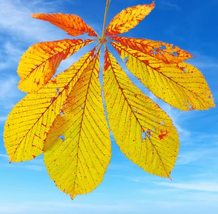 Leaf and Sky.