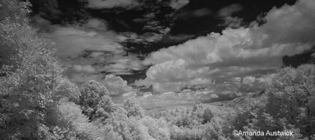 Infrared photo of our woods