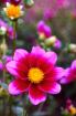 2017 Flower