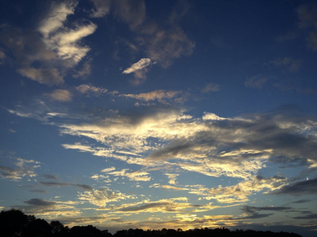 Wind blown sunset