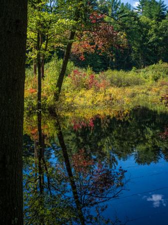 Autumn Preview