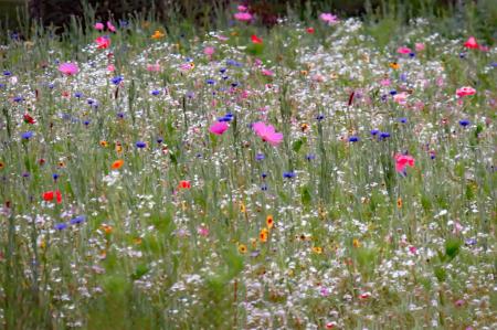 Pastel Flower Field