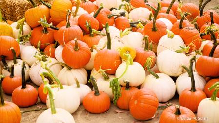 The Many Shades of Pumpkins