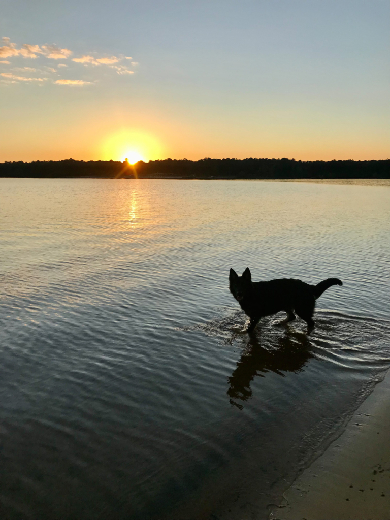 Pup at sunset - ID: 15951629 © Elizabeth A. Marker