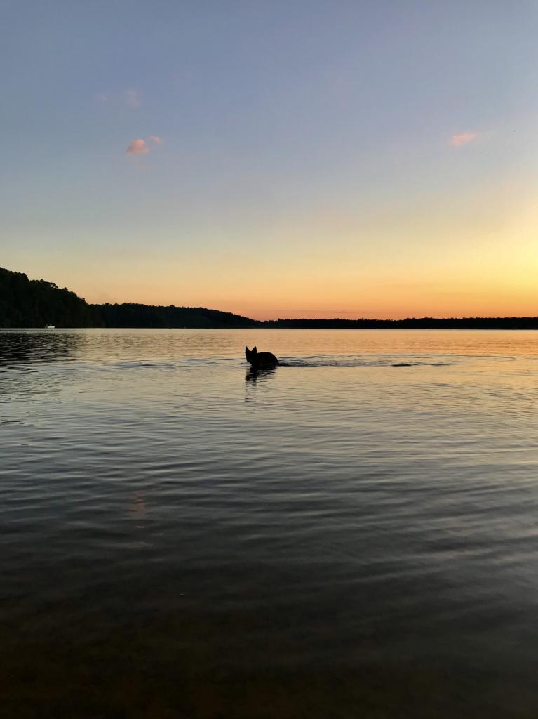 Sunset swim - ID: 15951631 © Elizabeth A. Marker