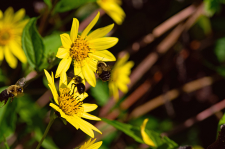 Bee Squadran
