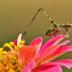 © Janet Criswell PhotoID# 15952188: Summer Grasshopper