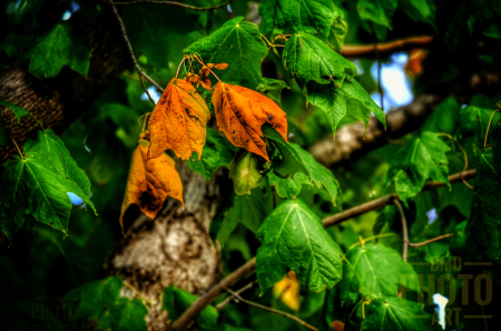 ~ ~ A HINT OF FALL ~ ~